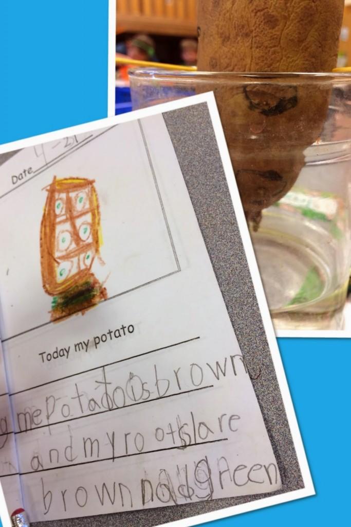 http://www.teacherspayteachers.com/Product/St-Patricks-Day-Paddy-Potato-Project-214119