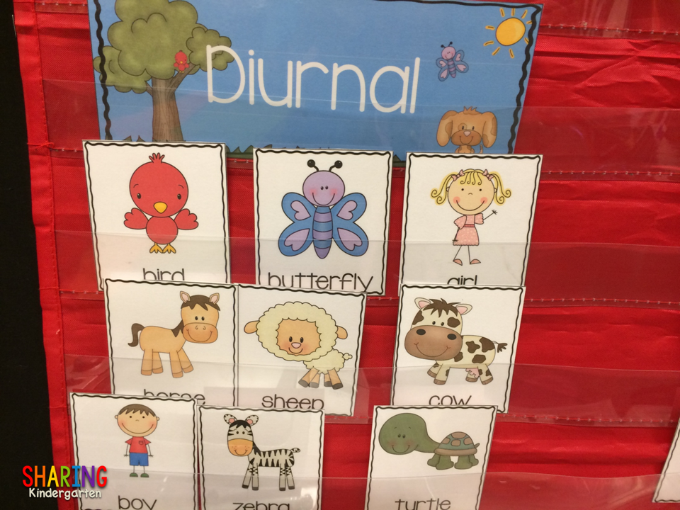 Diurnal Animal Sorting