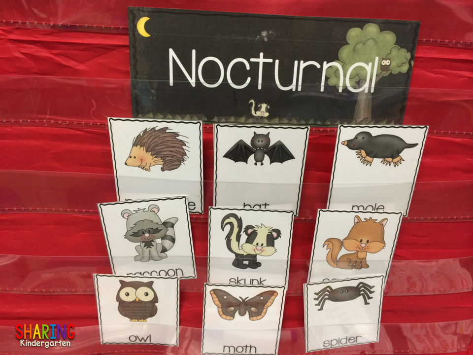 Image of: Animales Nocturnos Nocturnal Animal Sorting Sharing Kindergarten Nocturnal Animals Sharing Kindergarten