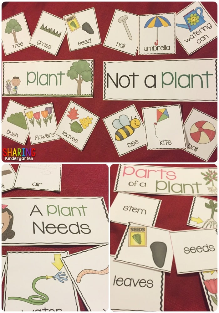Plants Unit that is as easy as Print and Play!