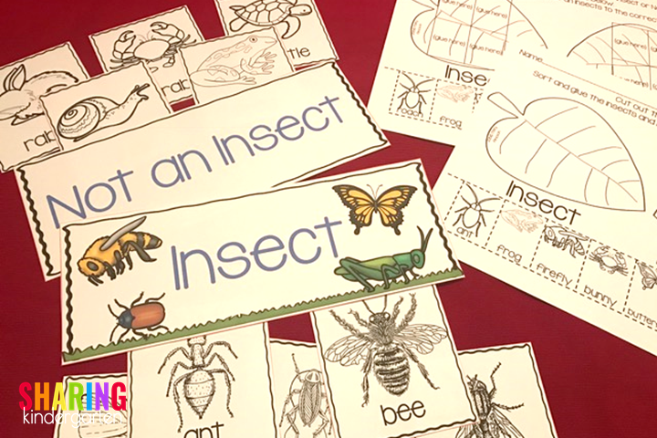 Insect sorting printables and sorting pieces