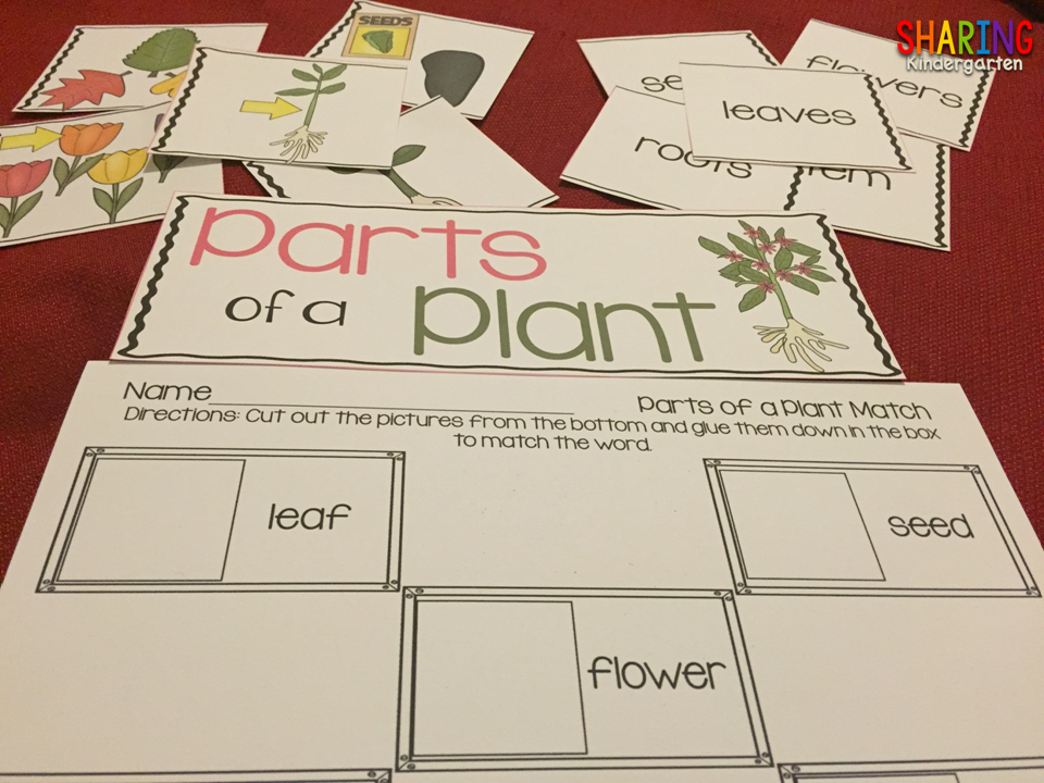 Parts of a Plant Game and Printables