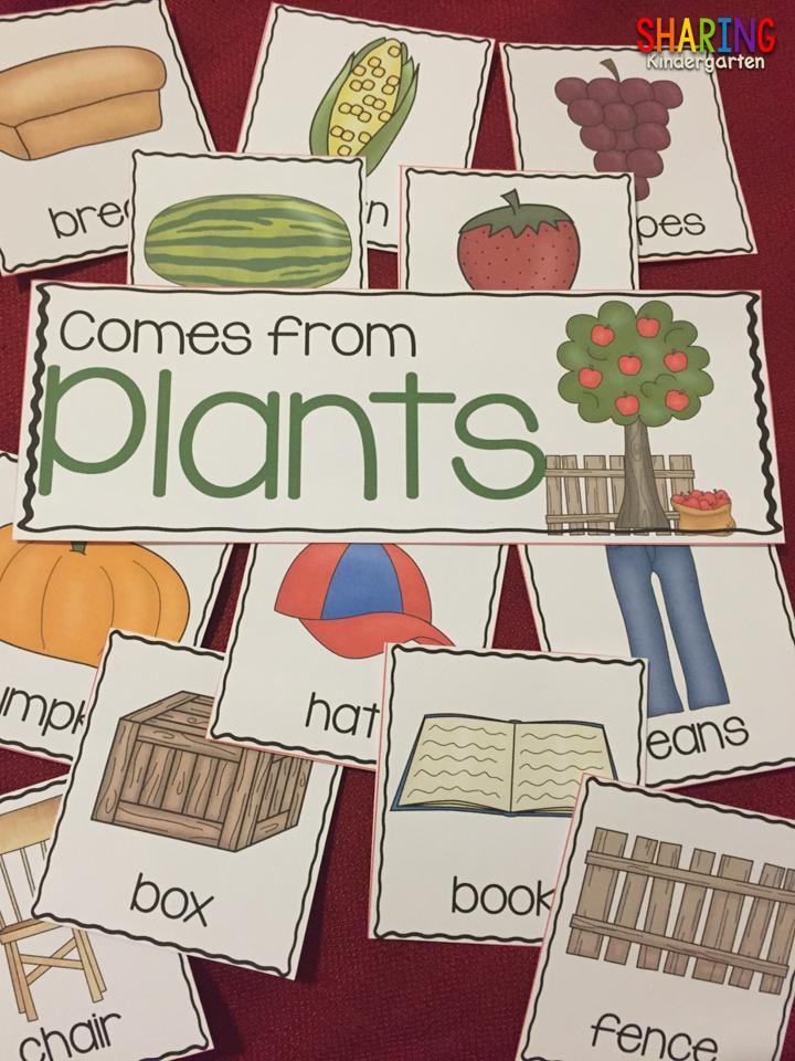 https://sharingkindergarten.com/product/plants/