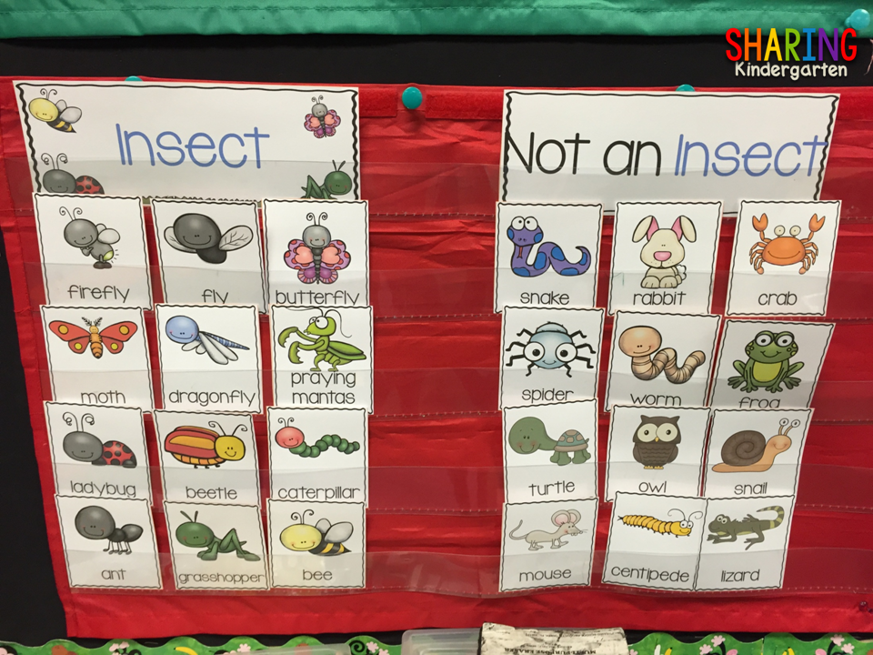 sorting insects and non insects