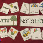 Plants Unit for Kindergarten