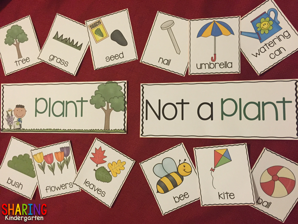 Plant and Not a Plant Pocket Chart Activity