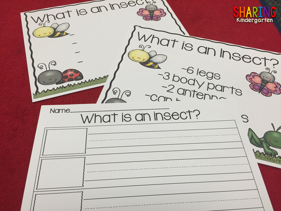 Insects {Print & Play Pack} - Sharing Kindergarten