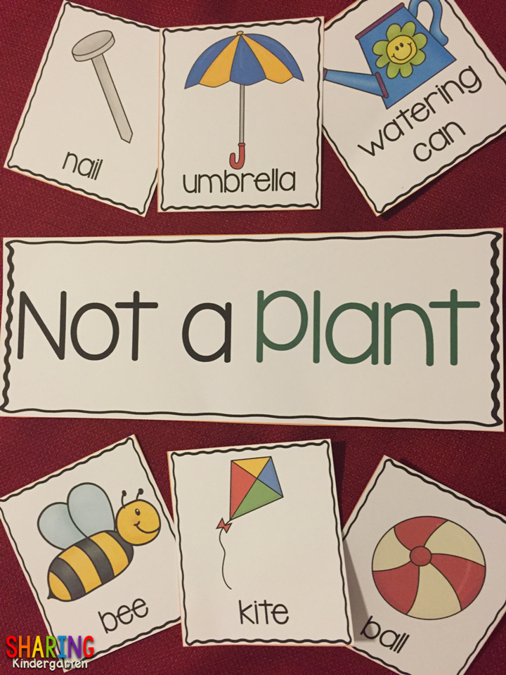 Not a Plant?