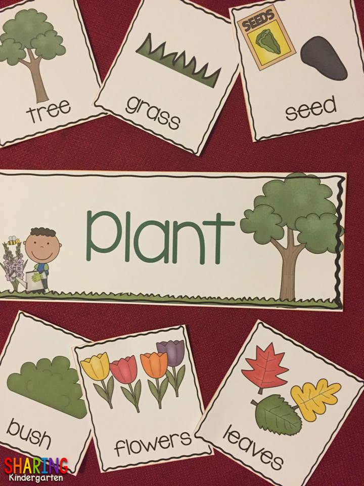 PLANTS galore!