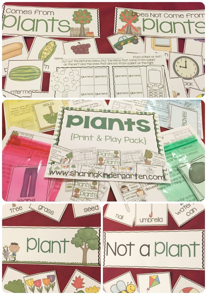 Plants Unit for Kindergarten with plant printables and plant lesson plans