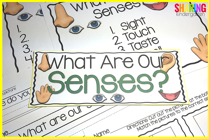 What Are Our Senses?