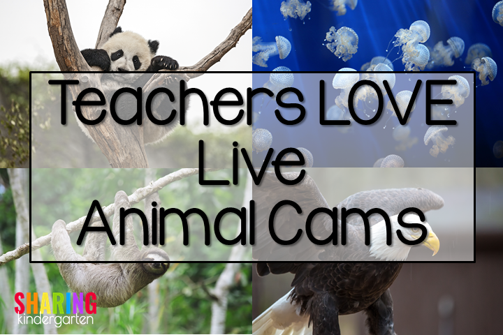 Teachers love live animal cams