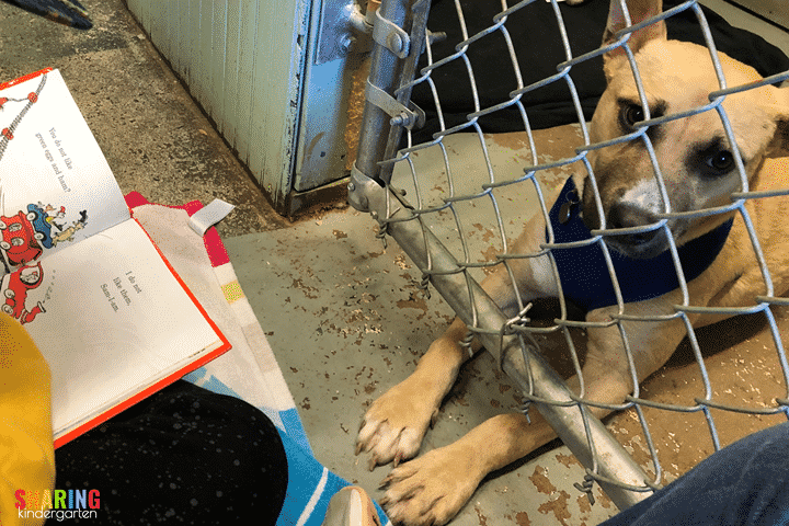 Check out this sweet dog listening to my student read. This almost made me cry!
