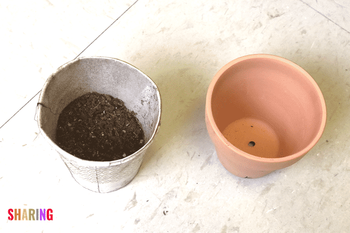 Pour the soil into a cup to have the students pour the soil into the cup.